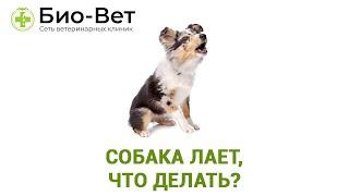 Собака лает, что делать?