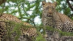 Serengeti National Park, Tanzania in 4K Ultra HD
