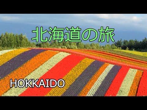 北海道の旅(夏) 札幌 旭山動物園 富良野 美瑛 青い池 十勝岳