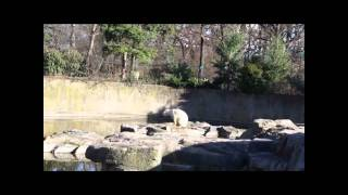 Berlin Zoo - Knut the polar bear Dies 19 March