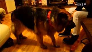 Marzenie Darii - podziękować ludziom, którzy bezinteresownie ratowali jej psa