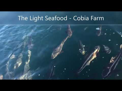 Cobia Farm