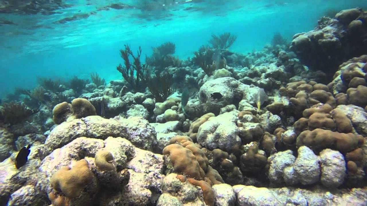 Snorkeling Off Akumal Beach Youtube