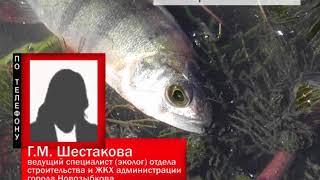 В Новозыбкове в городском озере погибла рыба