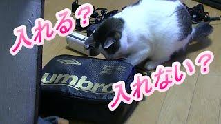 この猫はこのバックに入れると思いますか?