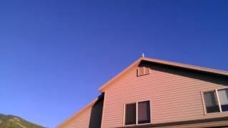 Young Birds Loft Flying - Ashby Loft - Pigeon Racing - 06/14/2012