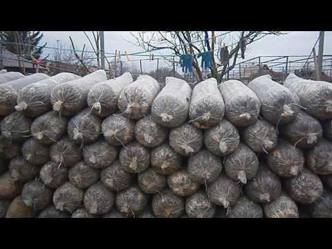 Как вырастить белые грибы в усовиях сада. участка, огорода