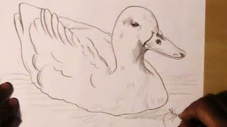 How to Draw a Simple Duck
