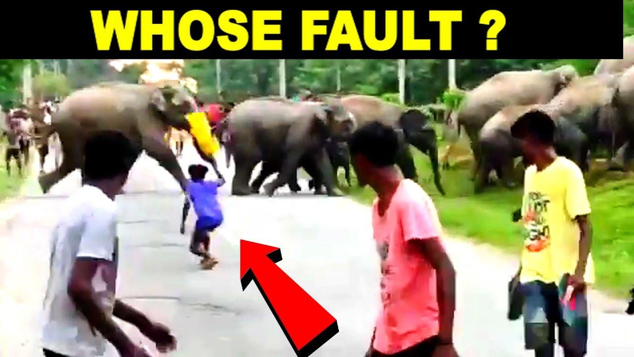 People Tease Wild Elephants crossing Road, WATCH What Happens NEXT