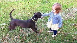 DOG BITES AT BABY!