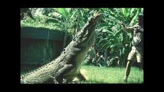Giant Indian Crocodile - the Biggest Crocodile in the world.