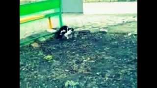 Весна + коты =??? Весенние обострение - Шайтан!