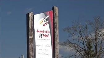 Besuch bei Japan Koi Wild - Full HD