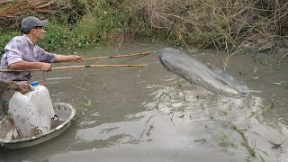 Kích điện ao nhà toàn cá lóc to khủng | fishing | phần 3 |NKMT