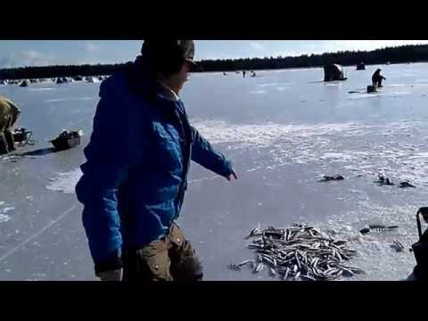 Зимняя рыбалка на корюшку и навагу
