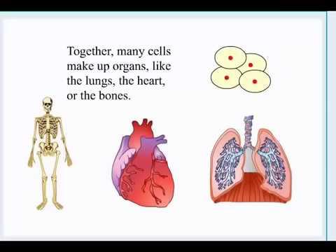 Mesothelioma cure