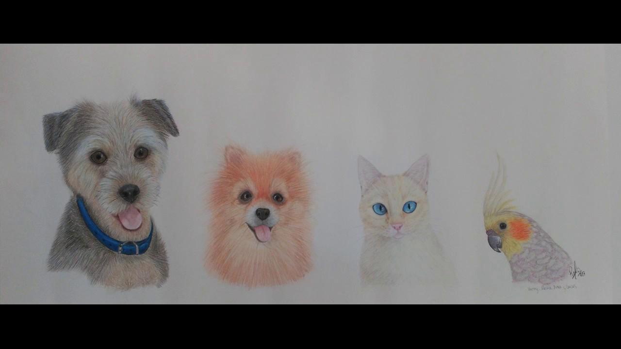 Dibujo Kenny, Reina, Noa y Lucas (Perro mix yorkshire, Pomerania ...