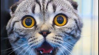 Коты и огурцы! Кот видео. Кот прикол. Огурец видео.