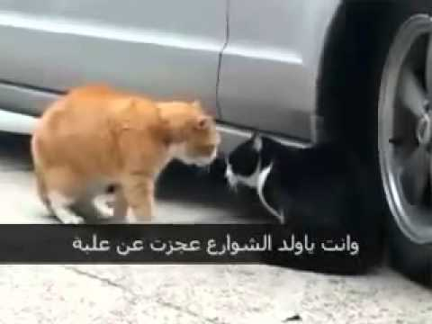 Very Funny Cats YouTube
