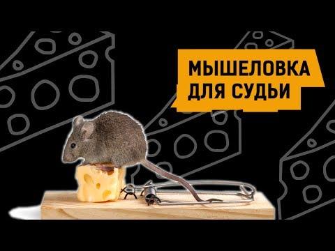 МЫШЕЛОВКА ДЛЯ СУДЬИ | Аналитика Юга России