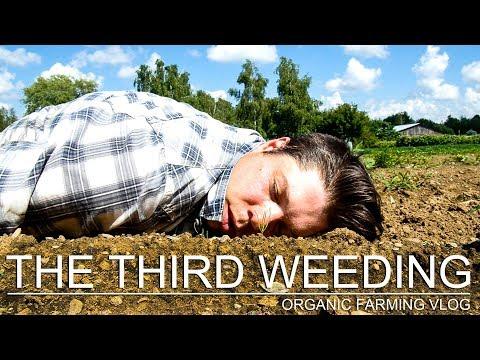 THE THIRD (AND FINAL?) WEEDING - ORGANIC FARMING VLOG (SE01 EP11)