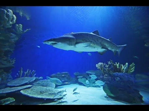 Dubai Mall -  دبي مول‎‎ - Dubai Aquarium - Underwater Zoo - ZEA - United Arab Emirates