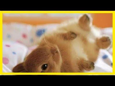 聽大師說:屬兔人名字中若帶這些「字」,可「不得了」!