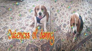 Danny loves the carpet!! Cuteness of danny...
