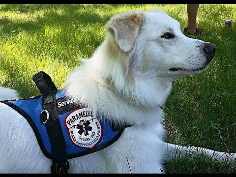 Ptsd Service Dog Is David Reed S