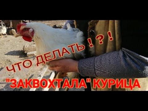 Вопрос: Курица ходит квохчет, но в гнездо не садиться, долго так будет?