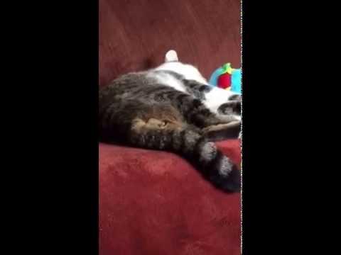 Cat Cums While Asleep - YouTube