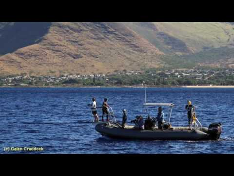 Sea Talk - Dr. Robin W. Baird: The Lesser Known Whales and Dolphins of Hawaii