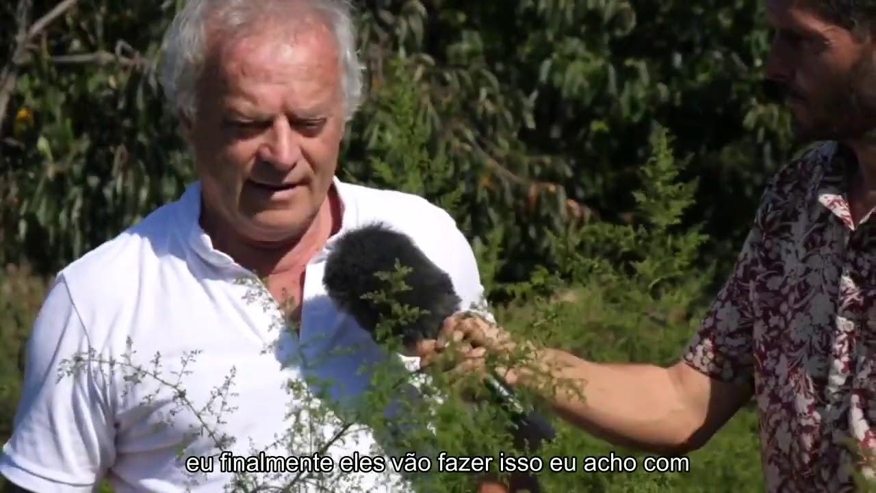 Artemisia Annua 2 - [Portuguese]