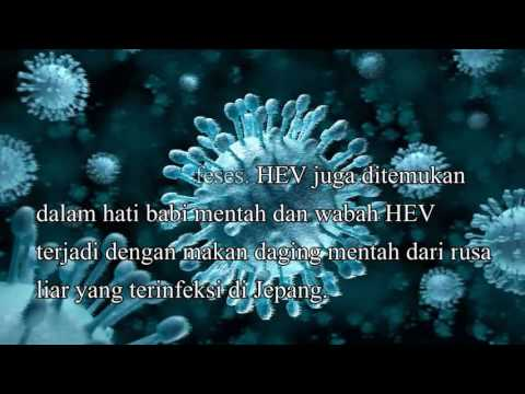 Foodborne Viruses: An Emerging Risk To Health