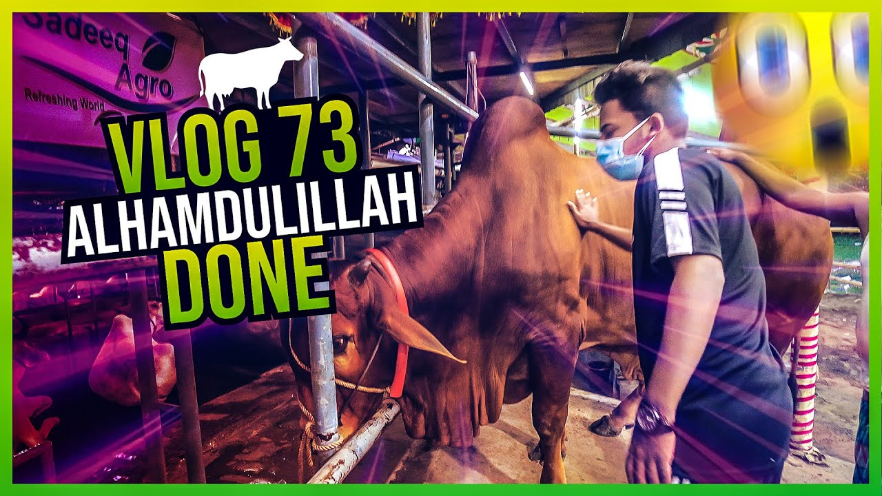 আলহামদুলিল্লাহ ঈদ এর গরু কিনলাম | Kurbani Eid | Gorur Haat| | Vlog 73 | Mir Arabi Ali