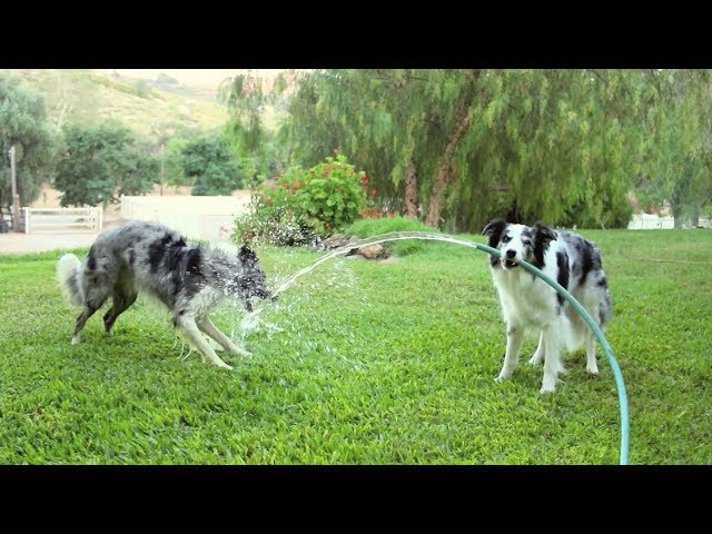 Who needs sprinklers? - Funny dogs