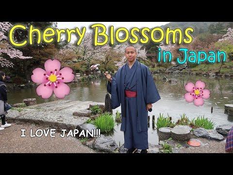 CHERRY BLOSSOMS (Sakura) in KYOTO, JAPAN | April 13th, 2017 | Vlog #82