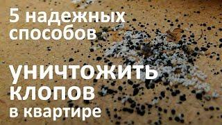 видео Борьба с тараканами в квартире: от народных средств до современных эффективных способов выведения