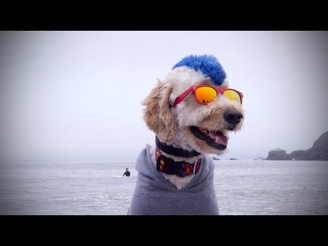 Pups Compete for Top Dog at World Dog Surfing Championships