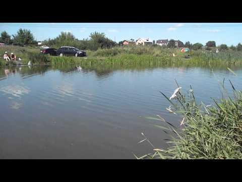 рыбалка на левашовском пруду