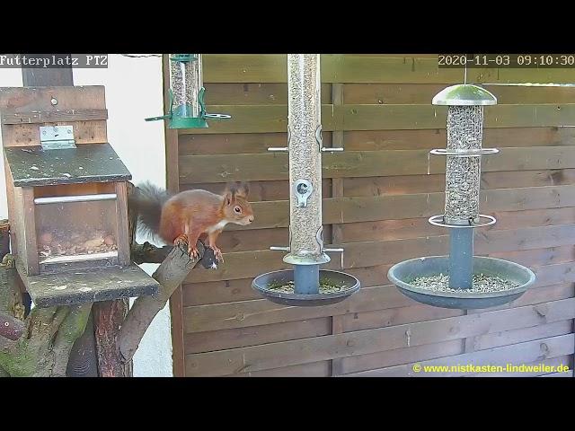 Eichhörnchen an der Futterstelle