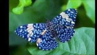 Самые красивые и экзотические бабочки на планете