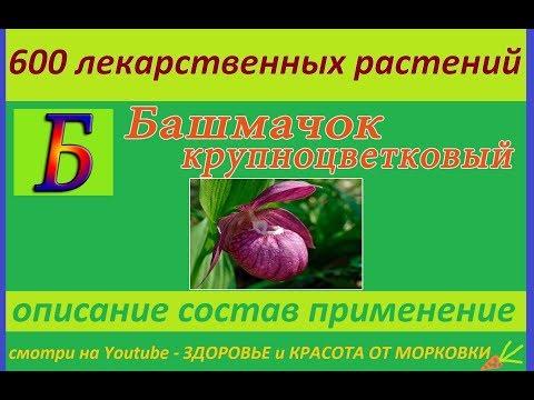 башмачок крупноцветковый  600 лекарственных растений