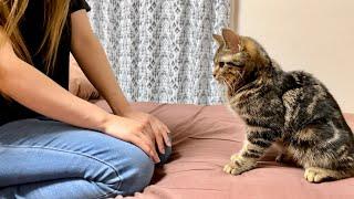洗濯物に悪さをしたのがバレて寝室に連行され厳しくお説教されてしまった猫w