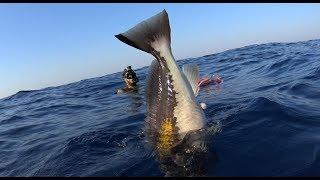 spearfishing adventures #24: Days of plenty