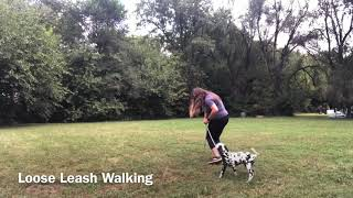 Kash the Dalmation | Day 4 of Puppy Camp
