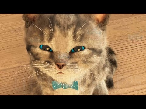 Play Fun Cute Pet Care - Little Kitten My Favorite Cat Game for Children and Toddlers