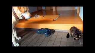 サビ猫のネコパンチが遅くて面白いです・・・