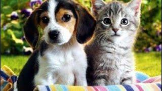 В России зарегистрировали первую в мире вакцину против короны для животных «Карнивак-Ков»