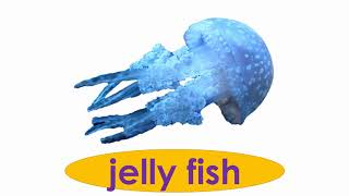 Fish, sea animals Vocabulary - Interclass Video